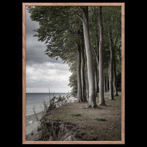 Beech forest poster