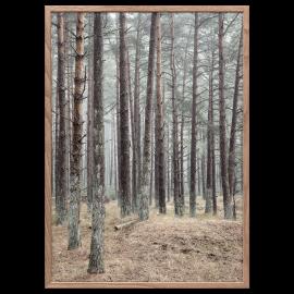 Pine Poster