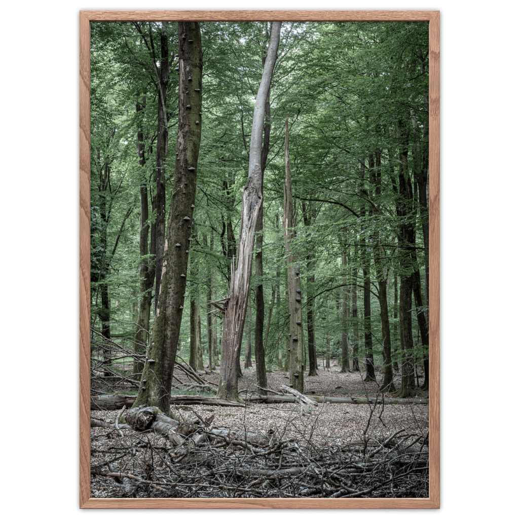 Forest poster Danish woodland