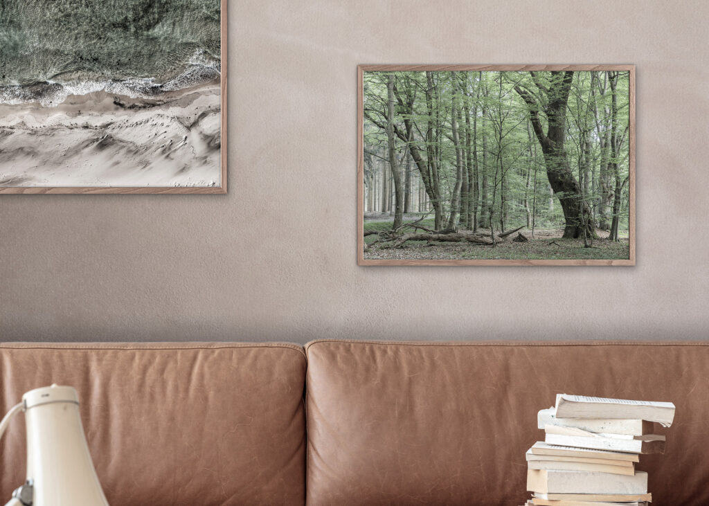 Natural Forest Poster
